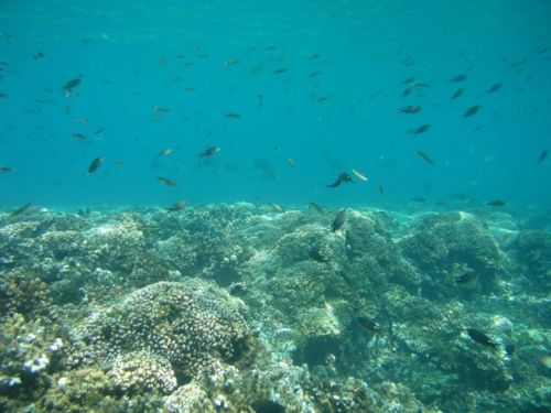 Uncovering Secrets to Coral Survival in a Changing Climate