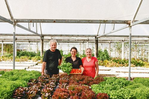 Why this Clevedon family's four-hectare market garden is taking off with veggie boxes