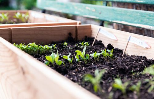 Spring gardening checklist: Everything to sow, plant and prepare this October
