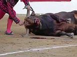 Sickening video of bull fighter repeatedly stabbing a bull in the head in Spain