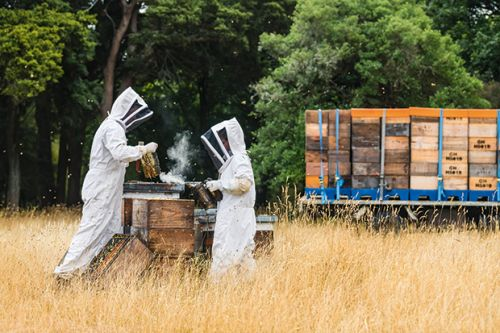 Meet the fifth generation of beekeepers living the sweet life in Wairarapa