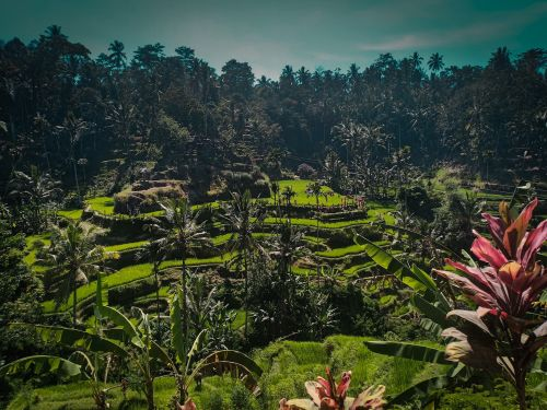 The ultimate travel guide to Bali