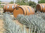 Stay in a giant barrel at this hotel located within a tequila distillery