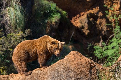 Wild Spain on the trail of bears