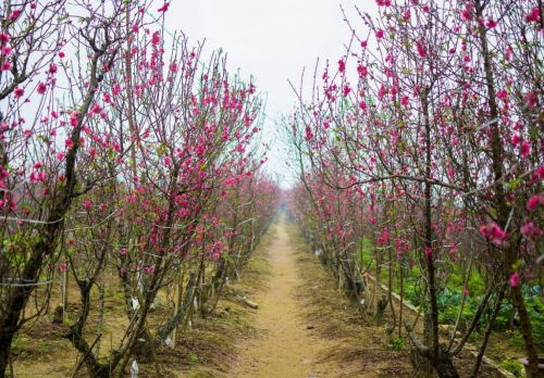 Top 7 destinations for visiting in Spring in Vietnam